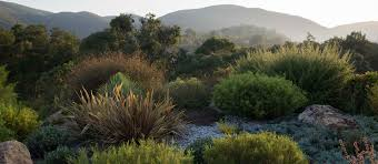 australian native plants online the planthunter u2013 life with plants