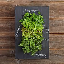 Hanging Wall Planters Chalkboard Wall Planter Williams Sonoma