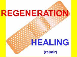 Tissue Renewal Regeneration And Repair Tissue Repair And Renewal Authorstream