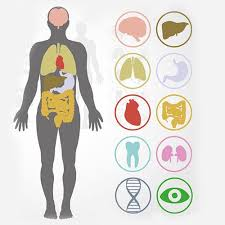 Human Anatomy And Physiology Courses Online 16 Best Www Iaeeperth2012 Org Images On Pinterest Human Anatomy