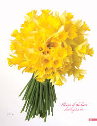 daffodils or jonquils what is the difference sharon mcgukin