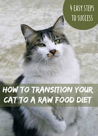 how to transition your cat to a raw food diet raw food diet cat