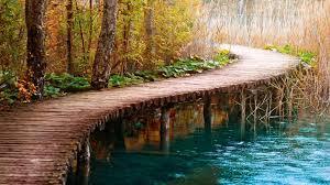 wooden path in forest hd desktop background wallpaper free