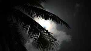 moon on a tropical silhouette palm trees stock footage