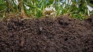the surprising healing qualities of dirt our world