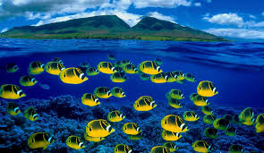 tropical fishes wallpapers group 82