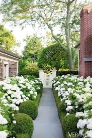 English Box Topiary - modern country style hydrangeas topiary and boxwood in the
