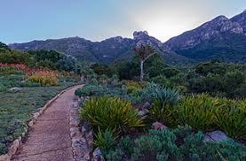 Kirstenbosch National Botanical Gardens by File Kirstenbosch National Botanical Garden Jpg Wikimedia Commons