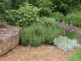 diy small space vegetable garden evergreen plants and garden
