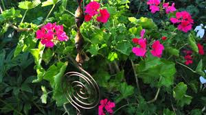 marena smith u0027s beautiful garden youtube