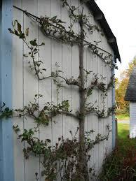 acreage not needed for growing fruit trees houston chronicle
