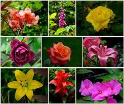 wellington botanical gardens flowers ali u0027s adventures