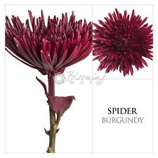 Wedding Flowers Delivery Burgundy Painted Spider Mums Online Flowers Flowers Delivery
