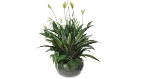 plants for funerals plants for funeral service finger pulse oximetry