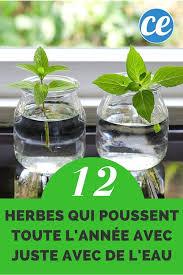 petites mouches cuisine plante interieur ombre avec petites mouches cuisine beau 1081 best