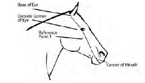 color requirements apha