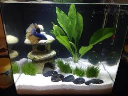 zen fish tank Google Search
