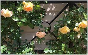 magnificent wrought iron rose trellis