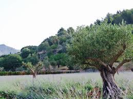 trees1000 easter eggs 16 best mallorca gardens images on mediterranean