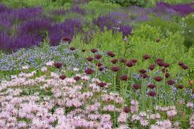 chicago native plants chicago u0027s lurie garden u2013 gardeninacity