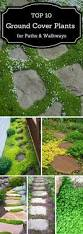 best 25 backyard plants ideas on pinterest slug control shade