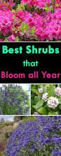 best 25 flowers garden ideas on pinterest flower gardening
