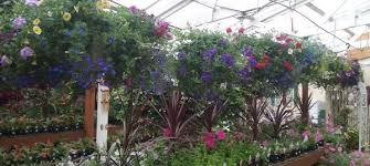Garden Express Summer Catalogue - plants bark and garden center