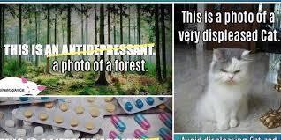 Antidepressant Meme - cat account defaces popular meme to make point about depression