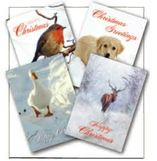 st martin apostolate animal charity cards st martin