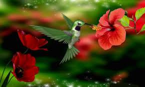 Hummingbird Flowers Hummingbird Birds U0026 Animals Background Wallpapers On Desktop