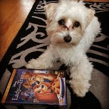 101 movie inspired dog names barkpost