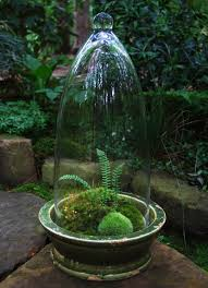 mossarium terrific website on growing mosses greenland moss