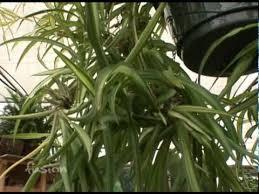 indoor nasa plants youtube