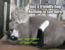 Cat Hug Meme - lolcats hug lol at funny cat memes funny cat pictures with