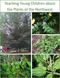 native plants of pacific northwest northwest native plants part 37 the wild garden hansenu0027s