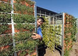 inside urban green fabric pocket vertical garden in italy