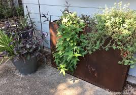 Potato Planter Box by Sweet Potato Vines Do Double Duty As Decoration And Dinner