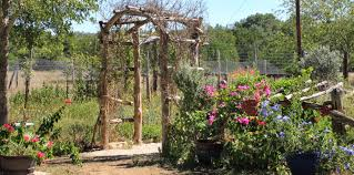 north texas native plants rock oak deer medina garden nursery for texas native plant week