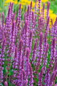10 Best Perennials And Flowers by 7 Perennials That Will Bloom Multiple Times This Summer Fade Cut