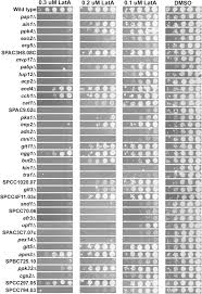 a genetic screen for fission yeast gene deletion mutants