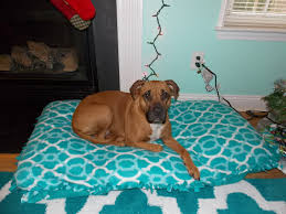 How To Make A Dog Bed Diy Recycled Dog Bed No Sew Youtube