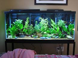 Live Plants In Community Aquariums by Planted 55 Gallon The Planted Tank Pinterest 55 Gallon