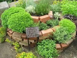 growing herbs indoors a great way to start your indoor gardening