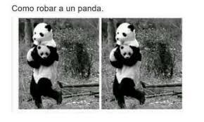 Memes De Pandas - como robar a un panda panda meme on me me