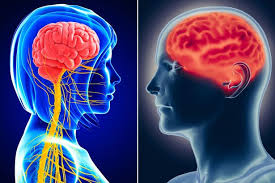 Anatomy Difference Between Male And Female Male And Female Brains Don U0027t Exist And Scientists Have The Scans