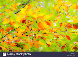 vivid colors of tree leaves can be useful as backgrounds soft