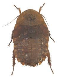 roaches in my bathroom small bugs near water in a bathroom hunker