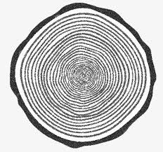 tree rings images images Tree rings tree clipart the tree ring texture png image and jpg