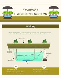 Types Of Vegetable Gardening by Infographic The Art Of Hydroponic Gardening Recoil Offgrid