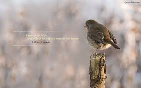 birds quotes quotes of the day